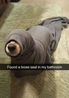25+ Hilarious Dog Snapchats That Are Impawsible Not To Laugh At
