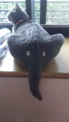 Cat butt and elephant face! lol