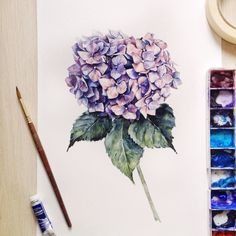 I was inspired by Catherine Klein art and painted Irises! What about Hortensia I just like to paint a lot of small flowers Watercolor Projects, Watercolor Drawing, Watercolor Illustration, Watercolor Flowers, A Level Art Sketchbook, Flower Sleeve, Art Folder, Purple Flowers, Small Flowers