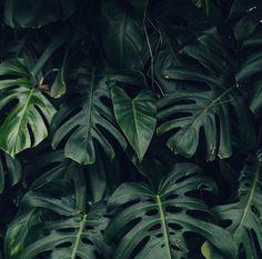 plant - vegetal - green mood - photo by Haarkon - https://www.instagram.com/haarkon_/