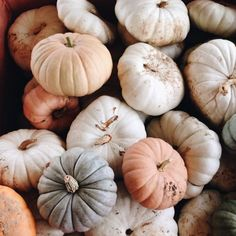 mini pumpkins make great house hold decorations