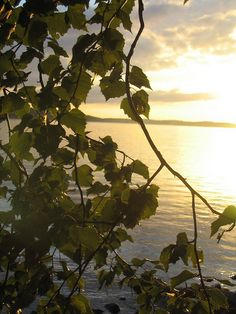 Finnish lakeland, Lake Roine, Finland by Visit Finland, via Flickr