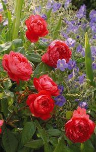 243 Best Rose Garden Images Rose Trees Gardening Pink Garden