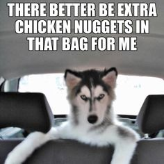 Funny Husky Meme Funny Husky Quote The post ap - Funny Dog Quotes - Funny Husky Meme Funny Husky Quote The post appeared first on Gag Dad. The post Funny Husky Meme Funny Husky Quote The post ap appeared first on Gag Dad. Husky Humor, Husky Quotes, Funny Husky Meme, Funny Animal Quotes, Animal Jokes, Cute Funny Animals, Funny Dogs, Siberian Husky Funny, Siberian Huskies
