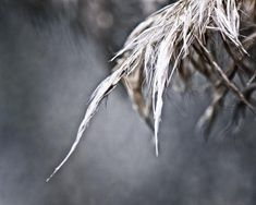 THE NATURE COLLECTION macro photography pampas by EmulsionProjekt, $28.00