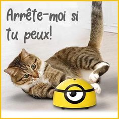 All Cat Breeds, Duck Wallpaper, Baby Animals, Cute Animals, Interactive Cat Toys, Cat Playground, Little Kitty, Cute Toys, Pet Birds