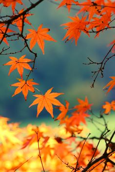 Simple and pretty picture of Autumn