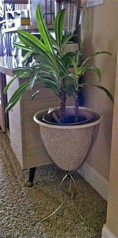 """Search Results for """"planter"""" – Hepcats Haven Planter Table, Planter Pots, Ceramic Table, Large White, House Plants, Bullet, Restoration, Sweet Home, Mid Century"""