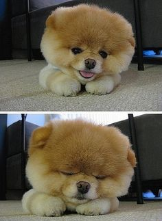Boo. The worlds cutest dog!! I look at his photos and can never be upset!