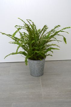 k nstlicher bonsai ficus benjamini birkenfeige 85cm kunstpflanze kunstbaum kunstblumen. Black Bedroom Furniture Sets. Home Design Ideas