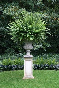 Yeah, there's something so over-the-top about big ferns on tall pedestals. I think a pair of these would be perfect guardians.