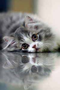 My what biiiig eyes you have!! cat kitten - great reflection too