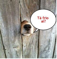 SOLARIS                           : FUGINDO DO FRIO  - Humor