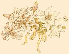 Language of flowers, 1884