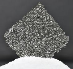 Opaline | Transparent tuiles | Pastry Chef & Author Eddy Van Damme