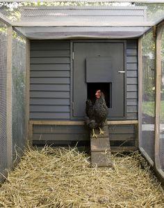 Chicken coop plan & material list, The Chicken Hutch
