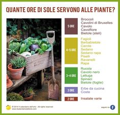 Quante ore di sole servono alle piante? Growing Vegetables, Vegetable Garden, Gardening Tips, Homesteading, Veggies, Flowers, Plants, Terrazzo, Diy