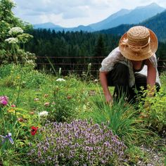 The Medicinal Herb Garden - Gardening - Mother Earth Living