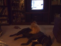 Didah and Chrissy...Didah was the best, dumbest dog ever.