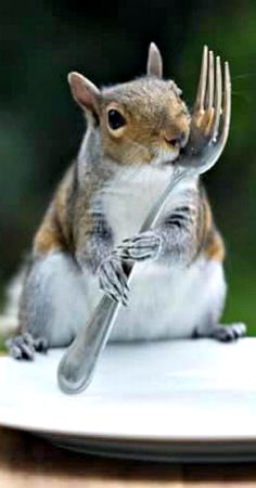 What's for breakfast? << today's dose of squirrel cuteness. #waitingforRedsandGrays