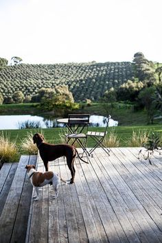 Shoreham Accommodation From Australia's Serenity Now, Cute Cats And Dogs, Us Beaches, Victoria Australia, B & B, Farm House, Melbourne, Building A House, Nest