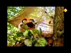 Koekeloere - Ridders en feeën - YouTube Youtube, Bird, Painting, Birds, Painting Art, Paintings, Painted Canvas, Drawings