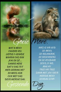 Afrikaanse Quotes, Angel Prayers, Goeie More, Good Morning Quotes, Deep Thoughts, Verses, Poems, Beautiful Pictures, God