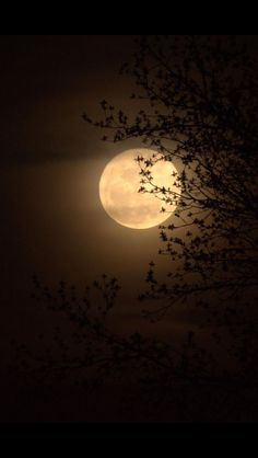 ❤️❤️I missed the super moon, Mark, but seeing you go by was better. I burned a list of limiting beliefs I want to release❤️❤️