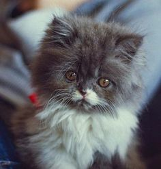 What a delightful fluffy kitten !!