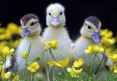 Ællinger!