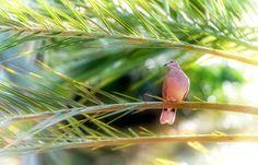 Bend of smoothness!  by Aziz Nasuti on 500px