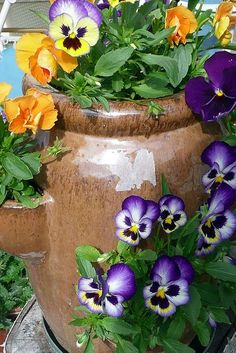 Pansies in a strawberry pot...very creative! #gardens #gardendesigns