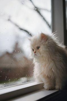 #gatti che osservano la pioggia.