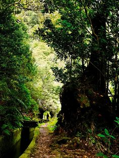 Levada walk by Madeira Islands Tourism, via Flickr