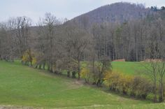 wald°sinnen: April°Wald Country Roads, Mountains, Nature, Travel, Woodland Forest, Naturaleza, Viajes, Traveling, Natural