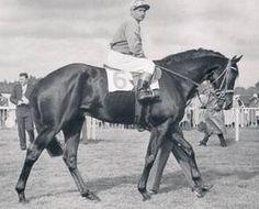 Waidmann(1956)Neckar- Waldrun By Alchimist. 3x4 To Herold, 3x5x5 To Aversion, 4x5x5 To Dark Ronald, 5x5 To Ard Patrick. 39 Starts 16 Wins 5 Seconds 8 Thirds.  Entered Stud In 1962.