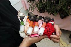 Abandoned baby bats ~  so adorable!