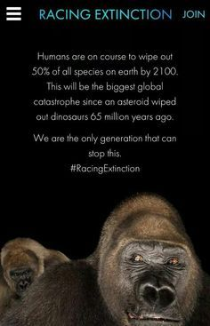 Racing extinction, by the makers of the cove save the planet, wildlife conservation, Our Planet, Save The Planet, Planet Earth, Save Animals Slogans, Racing Extinction, Save Our Earth, Popular Quotes, Wildlife Conservation, Endangered Species