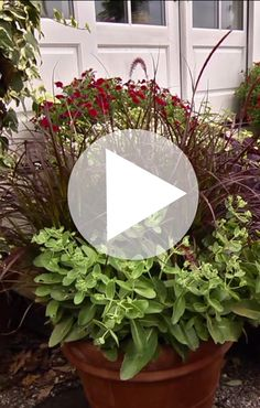 1000 images about p allen smith videos on pinterest p allen smith container garden and - P allen smith container gardens ...