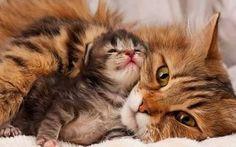 #cute #cats #sweet #little #kittens #weheartit
