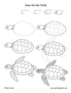 sealife drawing easy How To Draw A Sea Turtle sea turtle drawing lesson Sea Turtle Art, Sea Turtles, Sea Turtle Drawings, Sea Turtle Painting, How To Draw Turtle, Easy Turtle Drawing, How To Draw Fish, Baby Turtles, Drawing Lessons