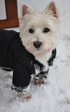 Winter soldier. | Flickr - Photo Sharing!