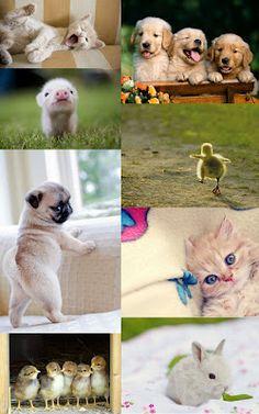 Baby animals.... heart melting.