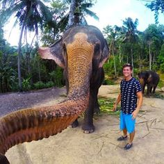 """Selfies aren't just for humans anymore. An elephant in Thailand decided he was feeling himself and got in on what we'll call an """"Elphie"""" with a GoPro   This Adorable Elephant Grabbed A Guy's Camera And Took A Selfie - BuzzFeed News"""
