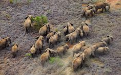 Africa from the air: Martin Harvey's aerial photographs of African landscapes   and wildlife.