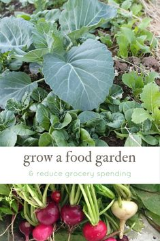 Grow an amazing food garden