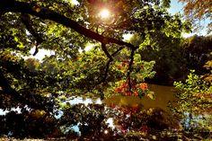 https://flic.kr/p/A3RmRh | garden | Garten im Herbst
