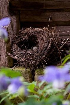 FARMHOUSE – ANIMALS – spring is a time for renewal and rebirth on the farm, and in this nest.