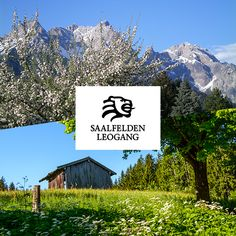 Entdecke die Vielfalt unserer Urlaubsorte Saalfelden und Leogang im Pinzgau mit all deinen Sinnen.  Ganzjährige Events - Outdooraktivitäten und jede Menge weitere kulturelle Highlights! Salzburg, Highlights, Events, Mountains, Nature, Travel, Vacation Places, Naturaleza, Viajes