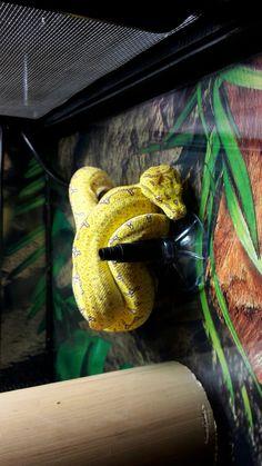 Octopus, Snakes, Morelia, Octopuses, Snake, Diving Regulator, Squidbillies, Calamari